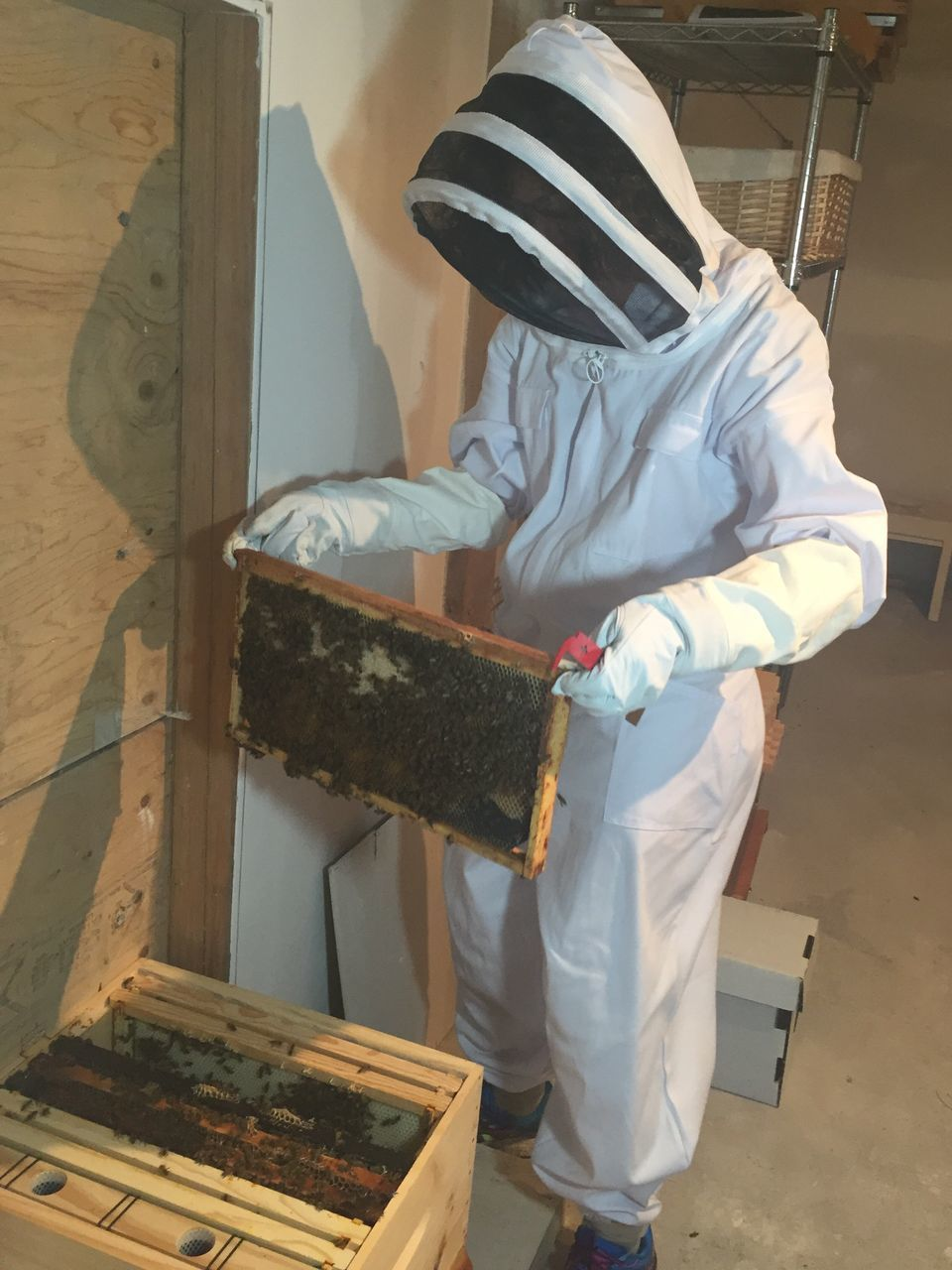 Woman In Protective Workwear Holding Honeycomb In Room