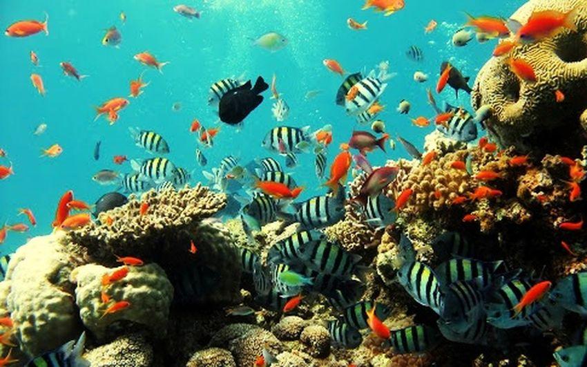 Coral By Motorola No mar tudo se encontra.