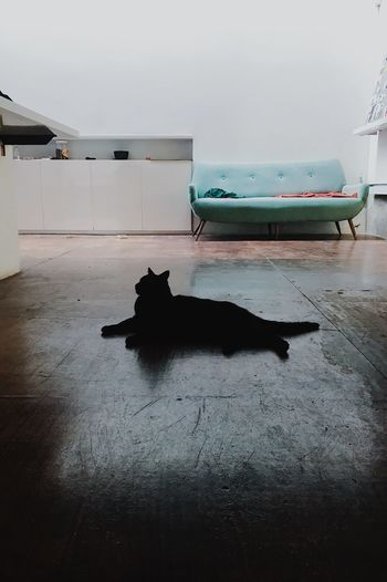 Gato Animal Themes Indoors  One Animal Domestic Animals Mammal No People Day Pets