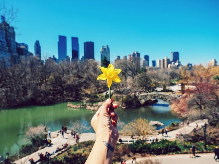 RePicture Travel New York Central Park Outdoors Flower Offering Tattoo Dragonfly Spring Into Spring From My Point Of View Tourist