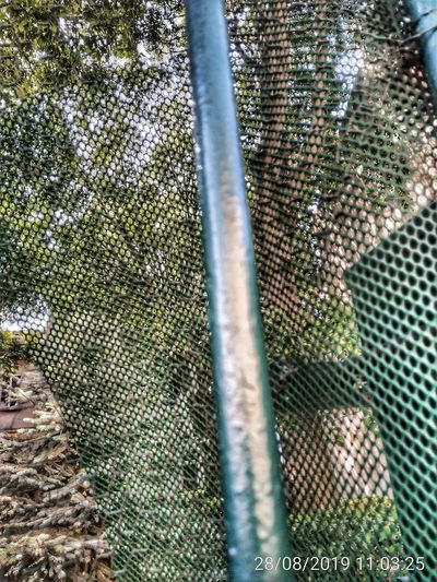 High angle view of an animal seen through metal fence