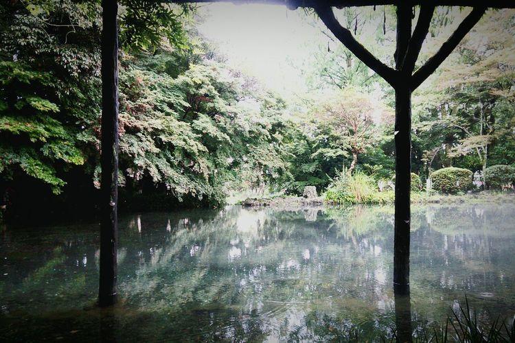 禊の池 Holy pond. Hello World Japanese Shrine Pond Holyplace