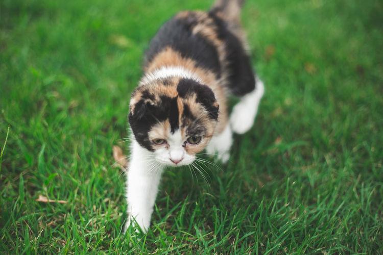 Kitten on a field