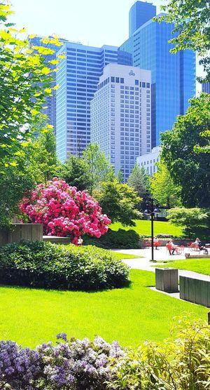 Flowering plants in park against buildings