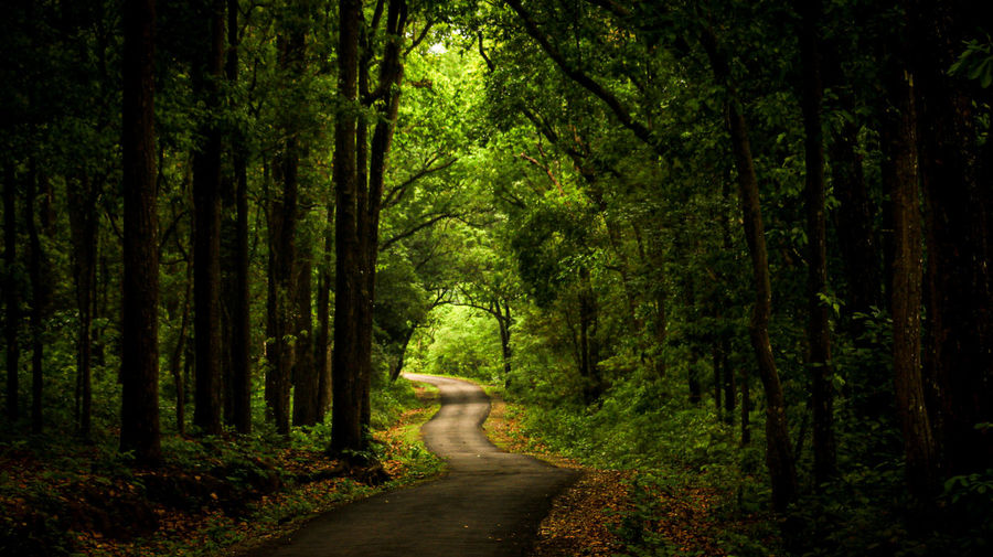 Dirt road amidst trees in forest