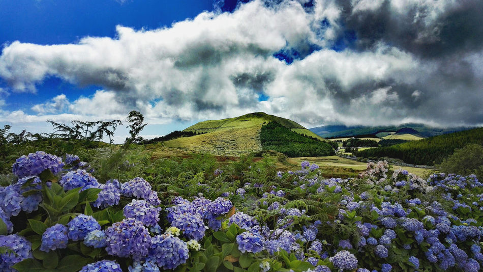 Abundance Azoren Azores Beauty In Nature Blossom Blue Cloud - Sky Flower Fragility Freshness Growth Hidden Gems  Hiking Hikingadventures Hortensia In Bloom Landscape Nature Outdoors Scenics My Favorite Place Showcase July Terceira Tranquil Scene Colour Of Life