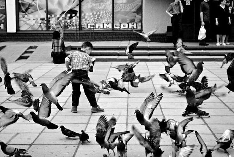 Lifestyles City Flying City Life Monochrome Photography Child Day голуби Полет ребенок