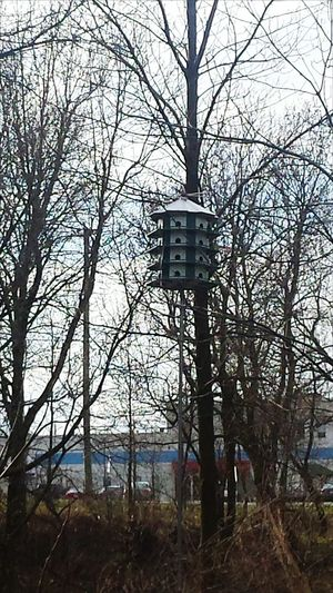 Birdhouse Bird House Hut Bird Foods For Birds🐦 Check This Out Riverwalk Relaxing Falls Park Beautiful Nature Nature_collection End Of The Day Springtime Country Road Treescape