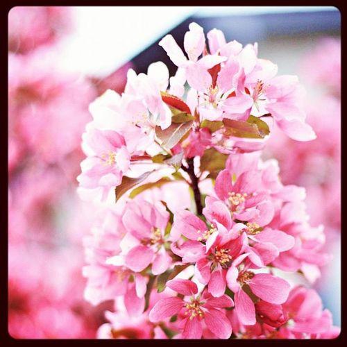 Beautiful may flowerrrss Canon Nature AGphotography Calgaryshiddengems