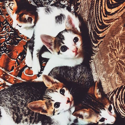 Cat Catlover Catsofinstagram Cute Cutelittlecreatures LoveThem  Socute Innocence Eyes Nose Fluffy Tiny Kittens Babykitty Baby Meow Newborn Catfreak Ifuckinglovecats Takingphotos Captured Click 4littlekittens Obsessedwithcats enjoyinglife life_is_good 😽😻😺😼😸😹