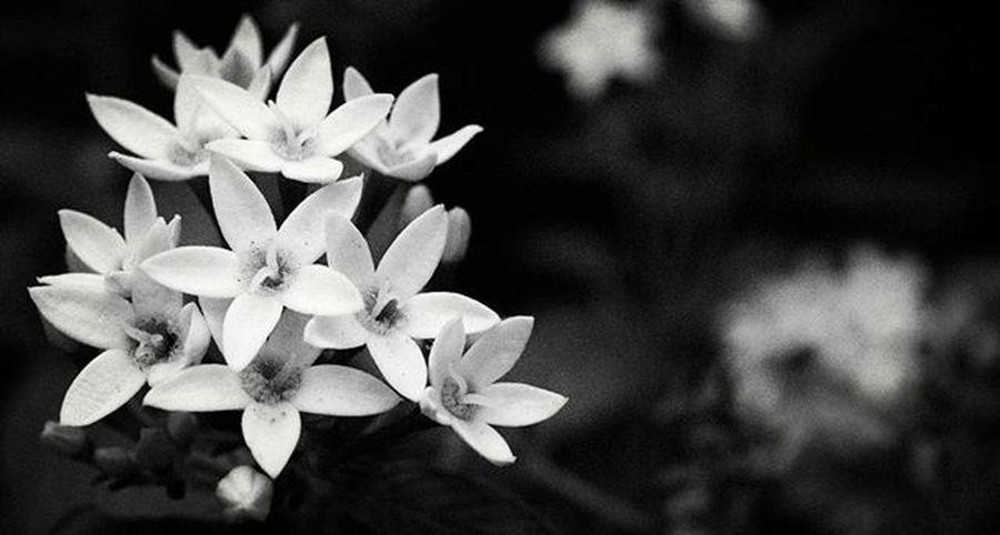 Black and white Blackandwhite Photographer Photo Ixora Photography Love Loneliness