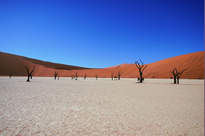 Arid Climate Blue Clear Sky Day Dead Sea  Dead Tree Desert Dried Seaweed Dunes Landscape Largest Dunes Nature No People Oldest Dunes Outdoors Sand Sand Dune Sossusvlei Sossusvlei Desert Sossusvlei Desert - Namibia Sossuvlei Travel