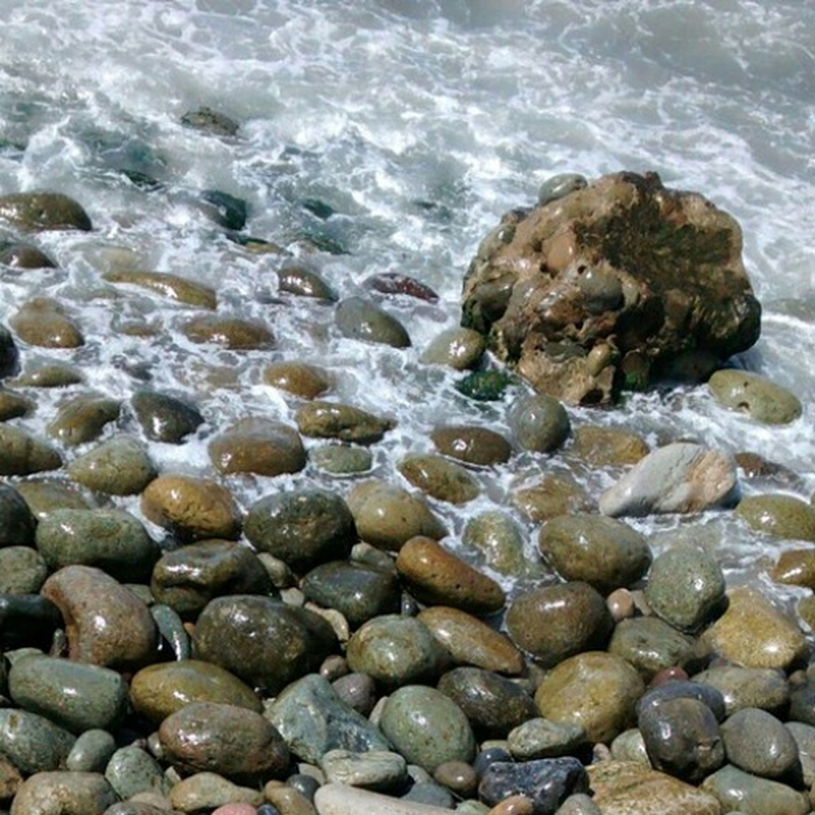 water, sea, beach, rock - object, high angle view, shore, nature, pebble, stone - object, animal themes, day, tranquility, beauty in nature, outdoors, shallow, rippled, rock, no people, wave, sea life