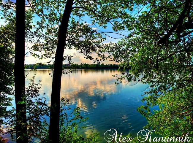 Water Reflection Tree Nature Lake Beauty In Nature Outdoors Growth Day No People Tranquil Scene Tranquility Scenics Sky