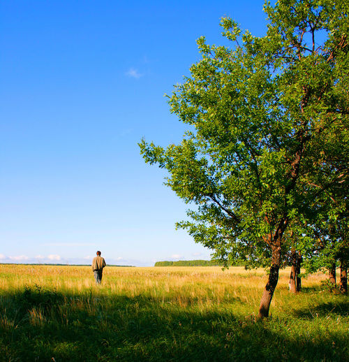 Beauty In Nature Blue Day Environment Field Grass Green Color Growth Land Landscape Men Nature One Person Outdoors Plant Real People Sky Sunlight Tranquility Tree