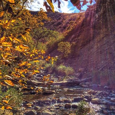 Farmington Canyon Utah Utahgram Fall Awesome auumn stream river beautiful westernlandscapes igutah igutah_801 ig_utah colors