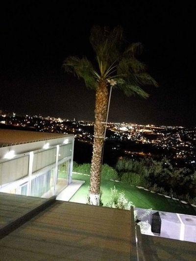 Night Palm Tree Beauty In Nature Cityscape No People night in Jerusalem