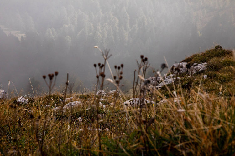 At the edge. Autumn Colors Wandering Wanderlust Beauty In Nature Day Environment Fog Forest Grass Growth Italy Lake Land Mountain Nature No People Oputdoor Outdoors Plant South Tyrol Tranquility Warmth