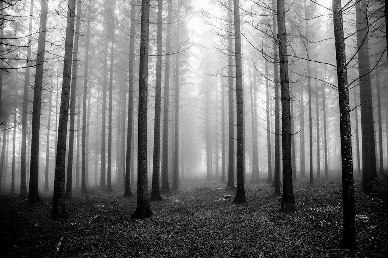 Dark wood.