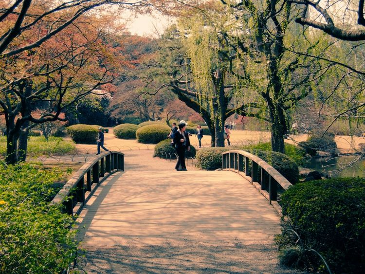 Hanging Out Taking Photos Check This Out Hi! Hello World Enjoying Life Eyeemphotography Cheese! Relaxing Things I Like Japan My Favorite Photo Tokyo,Japan Sakura2016 Cherry Blossom Urban Spring Fever Japanese