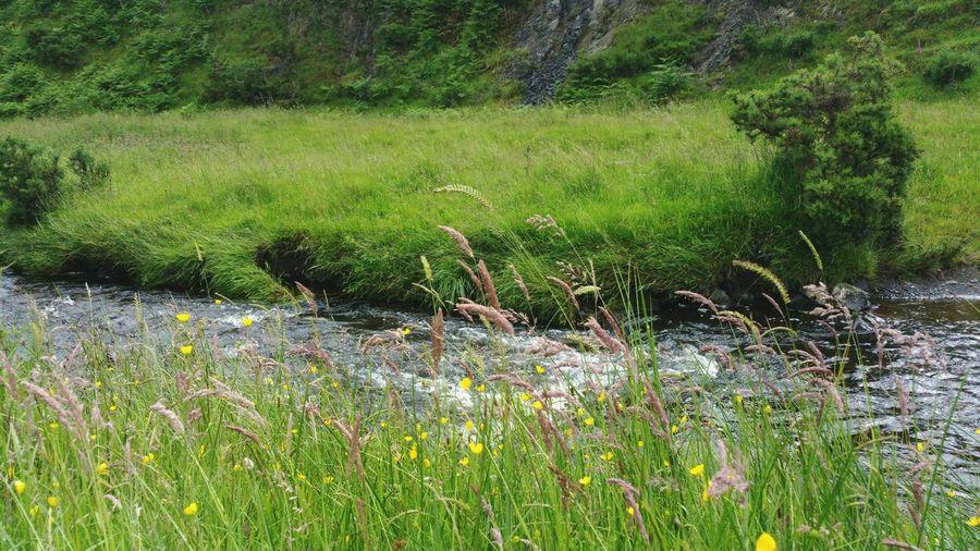 A Stream ... Wales River Summer Summertime Wildflowers Grass Water Nature Naturaleza Ручей речка цветы Природа Pays De Galles Countryside