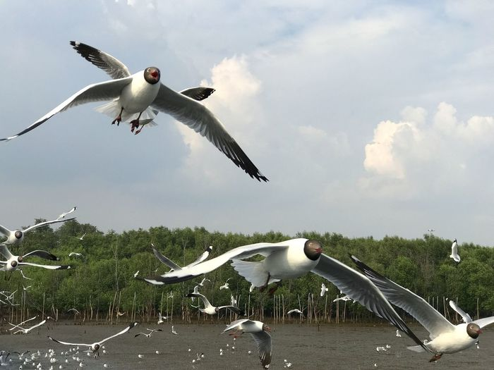Bird Spread