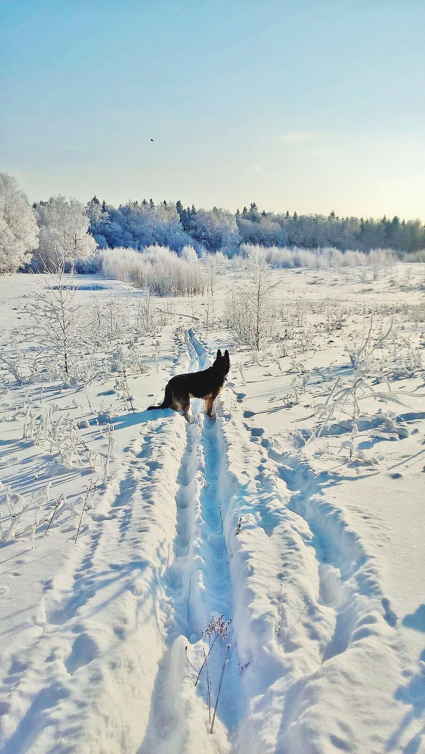 one animal, animal themes, snow, winter, cold temperature, bird, animals in the wild, clear sky, nature, wildlife, season, beauty in nature, tranquility, tranquil scene, landscape, scenics, outdoors, full length, no people, copy space