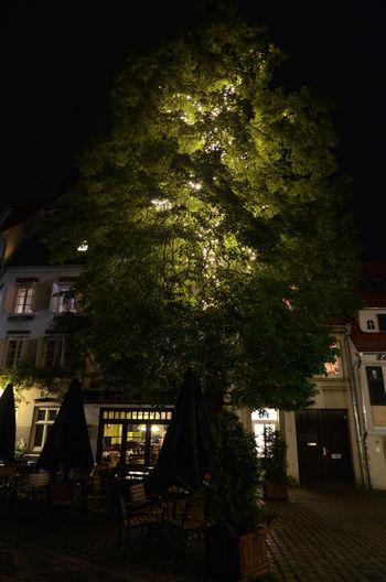 Building Exterior City Illuminated Night Outdoors Schnoor Tree