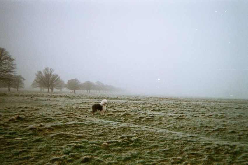 doggo Domestic Animals Animal Themes Mammal Field Tranquility Nature Landscape Grass No People Tranquil Scene Beauty In Nature Bale  Clear Sky Grazing Tree Rural Scene Day One Animal Dog Dogs Fog Foggy Morning EyeEm Animal Lover EyeEm