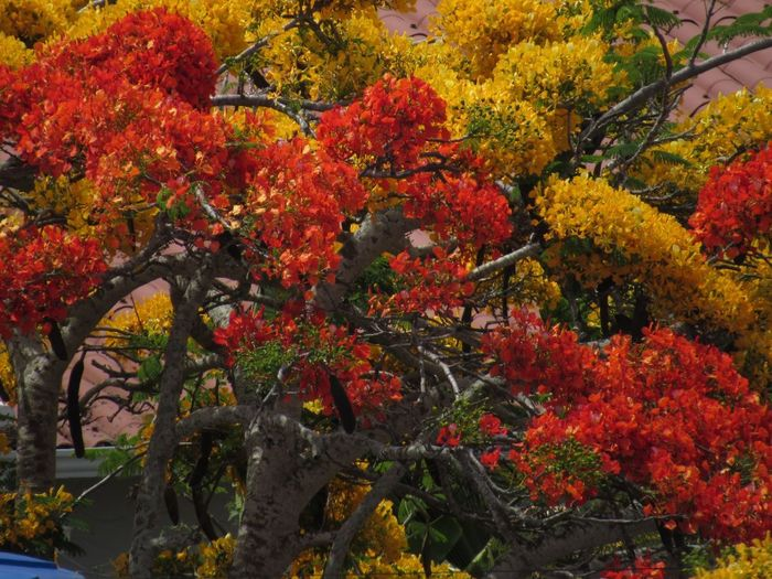 Colorful flowers Autumn Leaf Change Maple Tree Orange Color Tree Growth Flower No People Day Nature Beauty In Nature Outdoors Red Branch Freshness Close-up An Eye For Travel An Eye For Travel