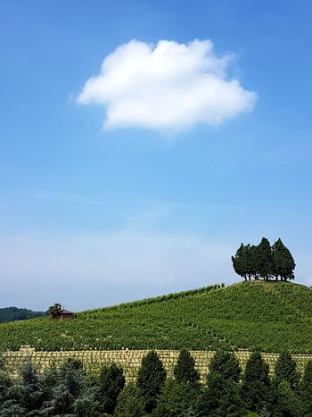 Growth Cloud - Sky Nature Agriculture Field Day Beauty In Nature Outdoors No People Sky Tree Freshness Tree Area Roero Piedmont Italy Langhe Vineyard Tranquility