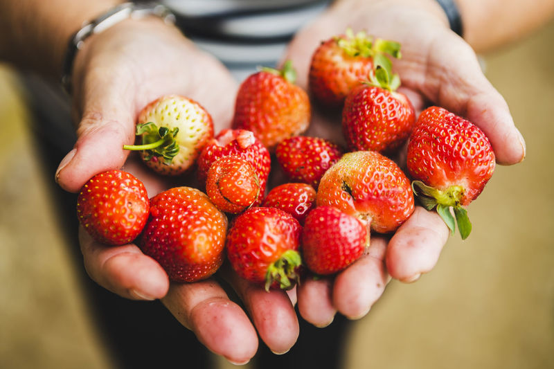 Close-up of hand holding strawberries