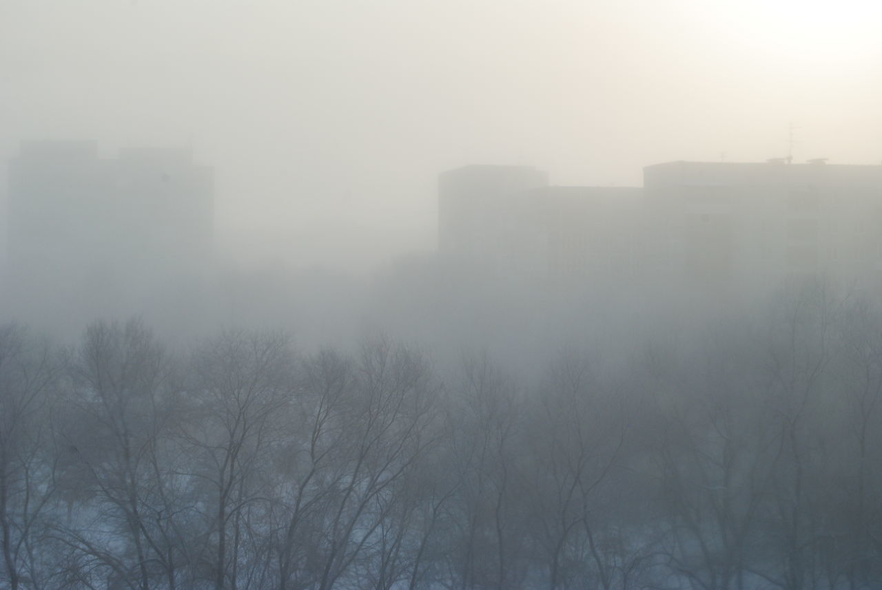 fog, foggy, mist, hazy, weather, nature, outdoors, bare tree, no people, tranquility, day, winter, cold temperature, tree, beauty in nature, dawn, landscape, architecture, building exterior, sky
