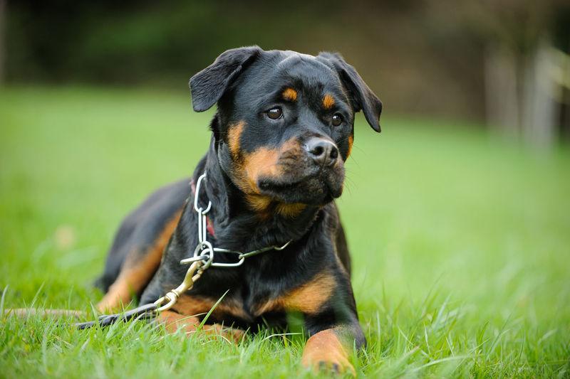 Portrait Of A Dog On Grassland