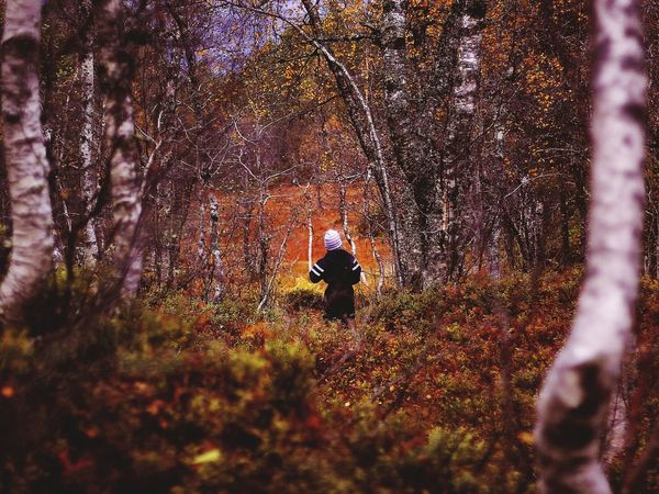 Forest Swamp Beauty In Nature Outdoors Nature Tree Day Magical Forest Magical Places Magical Trees This Week On Eyeem One Person Beauty In Nature Autumn Autumn Colors Authentic Moments Autumn Leaves Autumn Colours Connected By Travel Lost In The Landscape