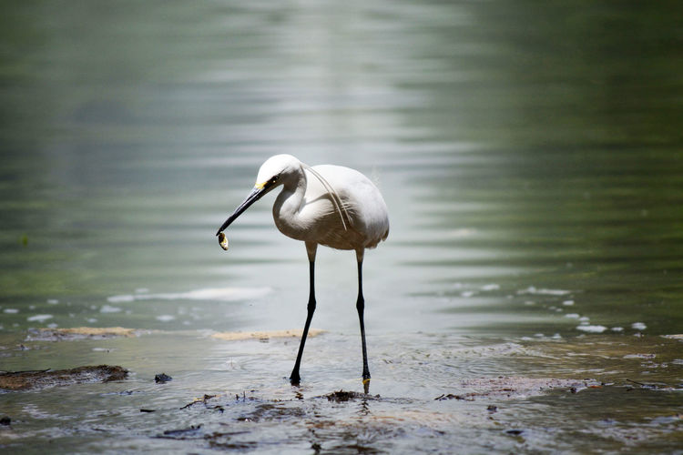 Close-up of egret in lake