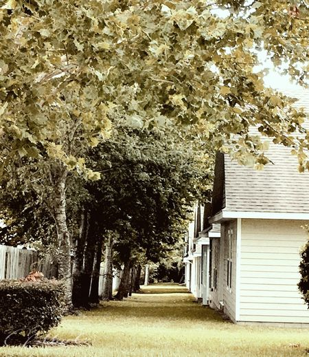 IPhoneography Rows Of Houses Rows Of Trees House Structure Community Subdivision