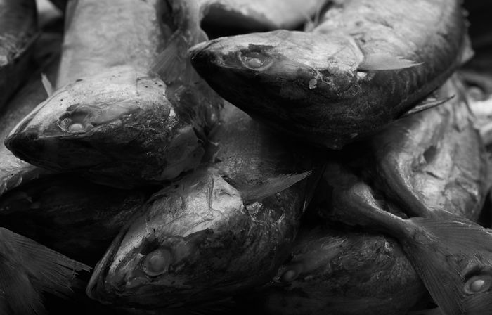 Mackerel fishes on a plate in black and white Dinner Meal Seafood Backgrounds Black And White Close-up Food Food And Drink Freshness Full Frame Healthy Eating Indoors  Mackerel Fish Market No People Raw Food Still Life Wellbeing
