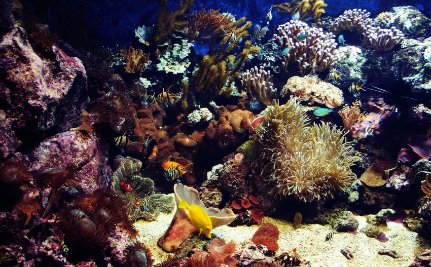 No People Nature Outdoors Coral Underwater UnderSea Water