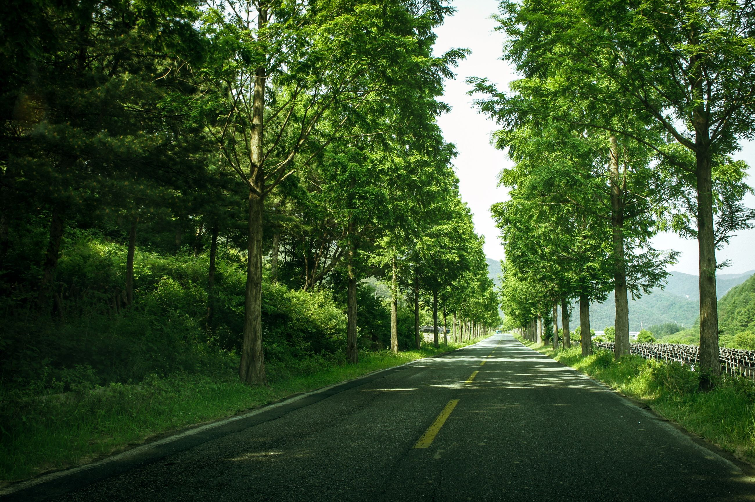 tree, plant, road, transportation, the way forward, direction, nature, no people, diminishing perspective, green color, day, tranquility, growth, land, road marking, marking, sign, beauty in nature, outdoors, symbol, treelined, dividing line