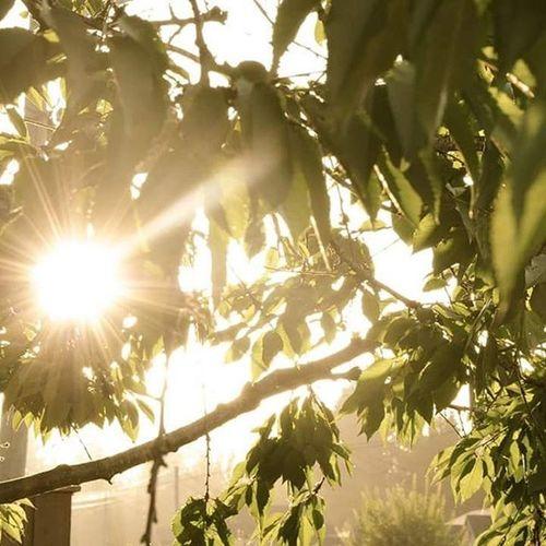 Sunburst Sunrays Trees Eveningsun Cumberlandbc Comoxvalley Faded Outdoors