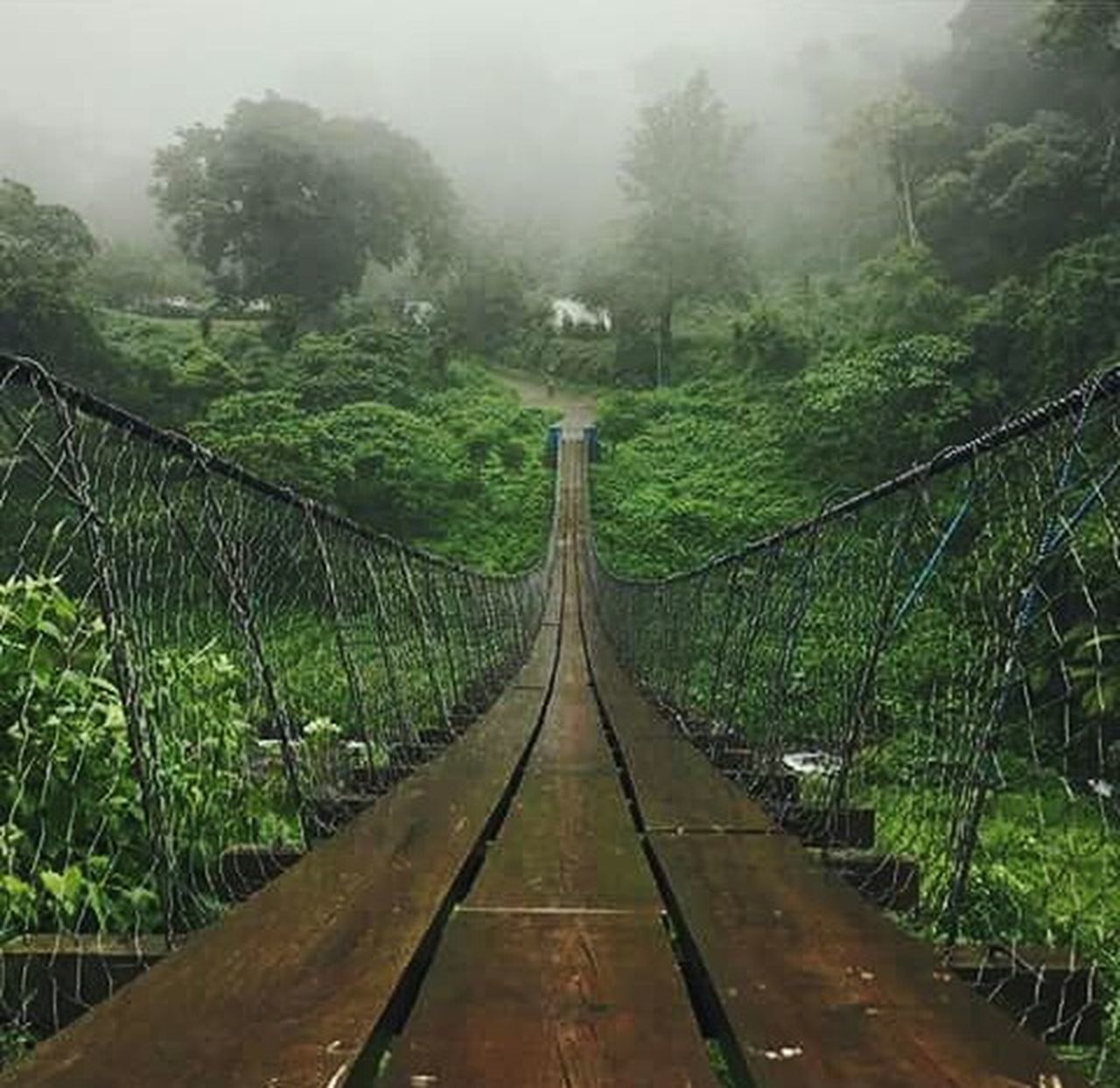 the way forward, tree, bridge - man made structure, nature, wood - material, footbridge, forest, growth, beauty in nature, outdoors, connection, tranquil scene, fog, tranquility, day, scenics, no people, water, sky
