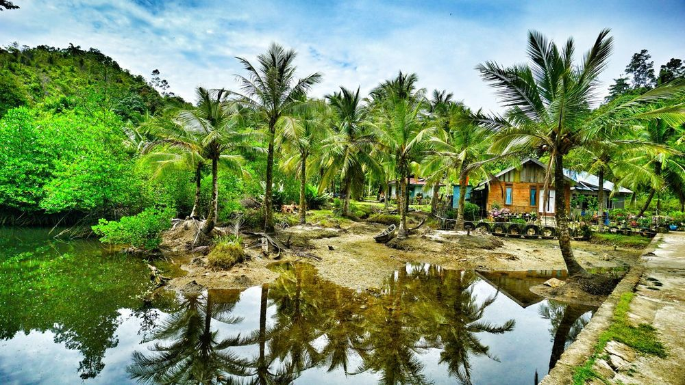 Village in Kapo-kapo island, West Sumatera Indonesia. Photo On Sale Photography By Arif Wibowo Photography By Jgawibowo INDONESIA Indonesia_photography Village Minangkabau Rancak Minangkabau Landscape SumateraBarat Teluk Mandeh Lanscape Landscape_Collection Travel Photography Pesisir Selatan Tree Palm Tree Sky Cloud - Sky Cultivated Land