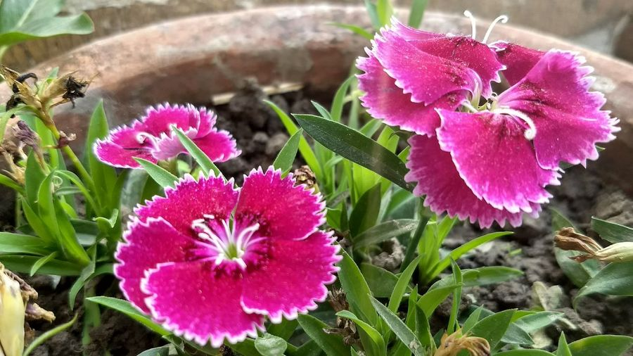 Flower Head Flower Water Petunia Leaf Petal Pink Color High Angle View Close-up Plant