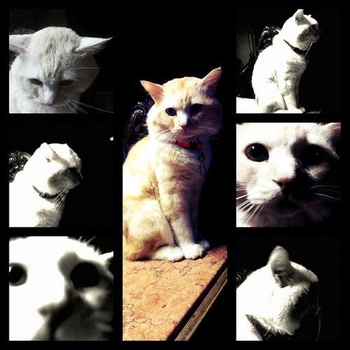 My_cat  El_7ob_kolo