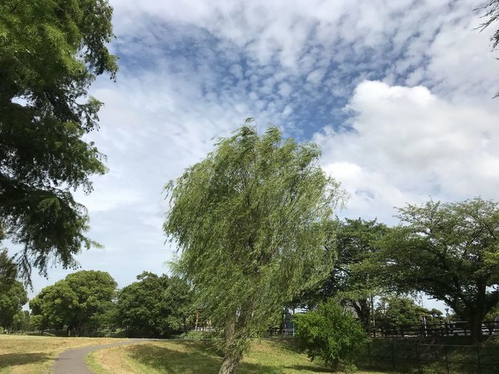 Plant Cloud - Sky Tree Sky Growth Nature Low Angle View No People Outdoors Park Green Color Day