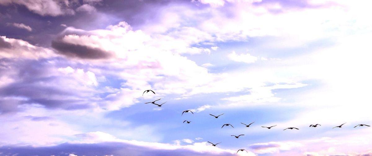 Flying Sky Mid-air Bird Cloud - Sky