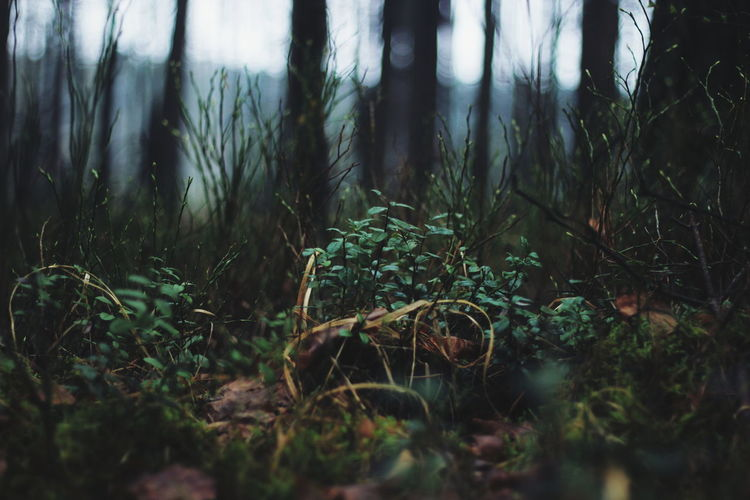Forest Nature Poland Spring VSCO Green
