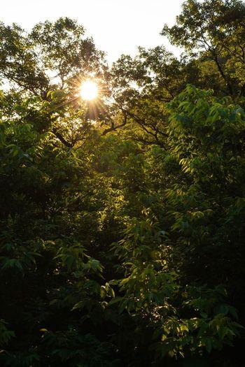 Sunlight Green