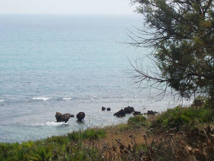 Sea Tree Nature